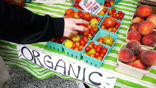 The Importance of Organic Food in Your Diet