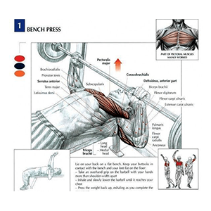 Benchpress Exercise Muscles Affected