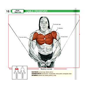 Cable And Pulley Crossover Muscles Worked Workout Equipment