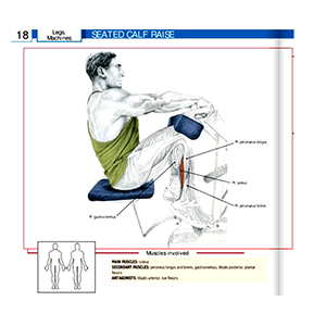 Calf Machine Seated Muscles Targeted With This Gym Equipment Names And Pictures