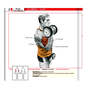 Dumbbells Curl Exercise Equipment In Use Home Gym And Beyond