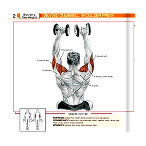 Dumbbells Exercise Equipment In Use And Muscles Effected Picture And Description