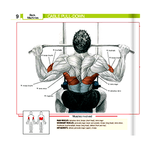 Lat Cable Pull Down Machine Muscles Workes And Exercises Done