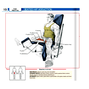 Leg Adduction Or Leg Abduction Gym Equipment Exercise Machine Muscles Being Targeted