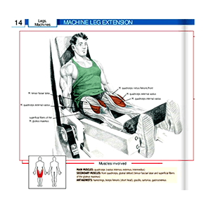 Leg Extension Machine Muscle Groups Effected Best Exercise Machine For Quads