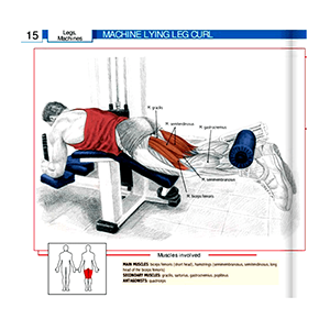 Lying Leg Machine Curl Workout Machine Muscles Targeted