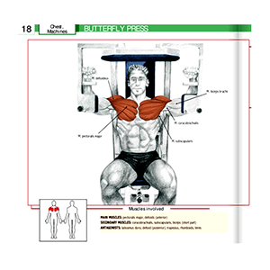 Pec Deck Exercise Machine Butterfly Press Workout