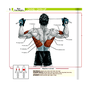 Pullup Bar Muscles Worked And Areas Targeted In The Gym