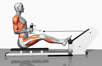 Seated Cable Row Machine Exercise