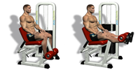 Leg Extension Machines (quads)