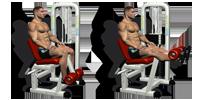 Leg Extension Machines (quads)