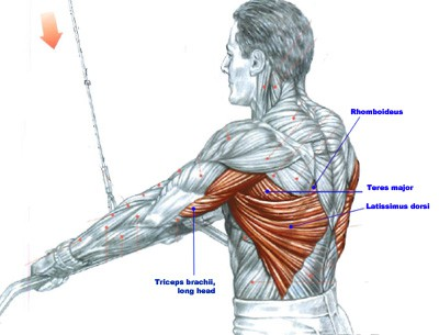 What Muscles Does The Lat Pulldown Machine Work