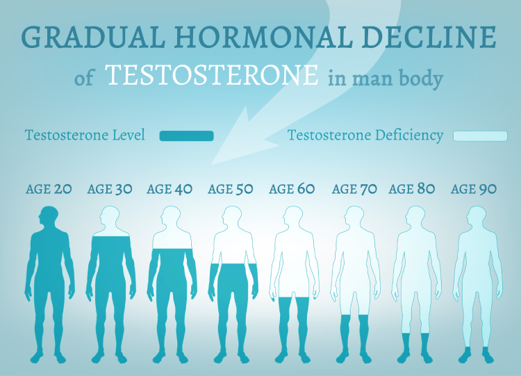 gradual hormonal decline of testosterone in mans body
